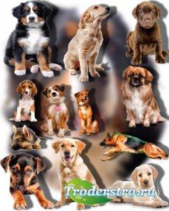 Png на прозрачном фоне - Породистые собаки