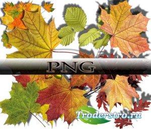 Новые клипарты Png - Осенние листья