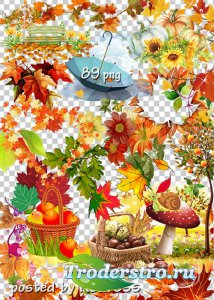 Подборка клипарта png без фона для дизайна - Осенние композиции, листья, эл ...