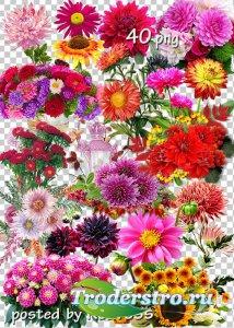 Подборка клипарта в png - Осенние цветы, букеты, композиции с цветами