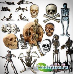 Клипарты для фотошопа - Черепа и кости