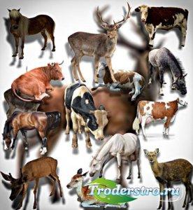 Растровые клипарты - Животные