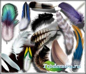 Клипарты на прозрачном фоне - Перья разных птиц