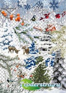 Клипарт на прозрачном фоне для дизайна - Зимние деревья, кусты, ветки и дру ...