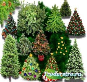 Клип-арты для фотошопа на прозрачном фоне - Зимние елки