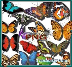Png клипарты - Бабочки