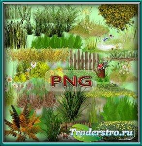 Клип-арты на прозрачном фоне - Зеленая и сухая трава