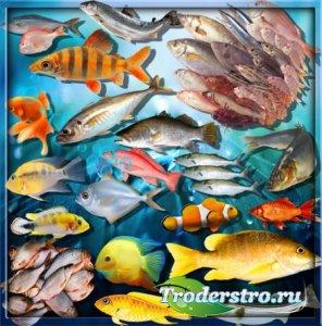 Качественные клип-арты - Рыба