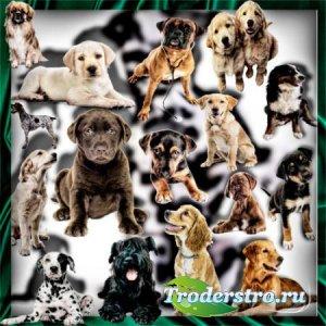 Качественные клип-арты - Породистые собаки