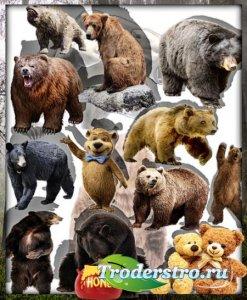 Png клипарты - Грозные медведи