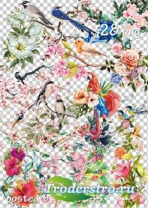 Подборка клипарта png для дизайна - Цветы и птицы