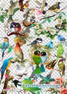 Подборка клипарта png - Цветы и птицы