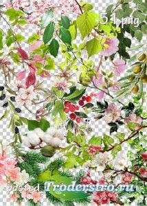 Tree branches, flowers, leaves png clipart - Ветки деревьев, цветы, листья  ...