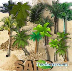 Клипарты для фотошопа - Пальмы и песок
