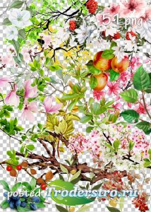 Tree branches, flowers, leaves png clipart part 2 - Ветки деревьев, цветы,  ...