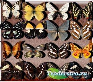 Клипарты на прозрачном фоне - Бабочки разных видов