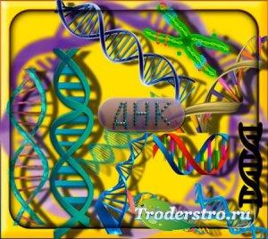 Прозрачные клипарты для фотошопа - Природное ДНК