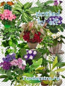 Комнатные растения - клипарт в PNG