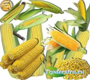 Клипарты без фона - Сладкая кукуруза