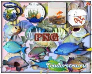 Прозрачные клипарты для фотошопа - Рыбы океанов