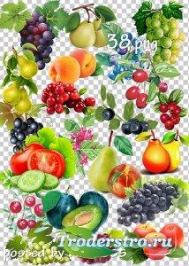 Клипарт png - Овощи, фрукты, ягоды