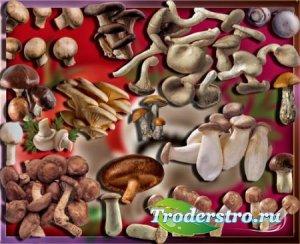 Png клипарты для фоторамки - Осенние грибы