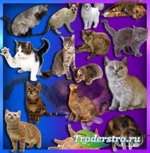 Растровые клипарты - Коты и кошки