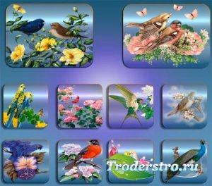 Прозрачные клипарты для фотошопа - Птицы в цветах