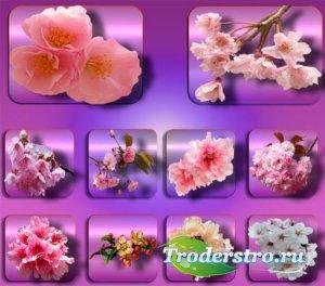 Png клипарты - Цветы в саду
