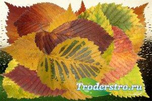 Клипарт Багрянец и золото осенних листьев