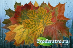 Клипарт Осенняя мозаика листьев клена